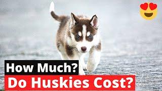 How much do Siberian Huskies cost? SHOCKING TRUTH