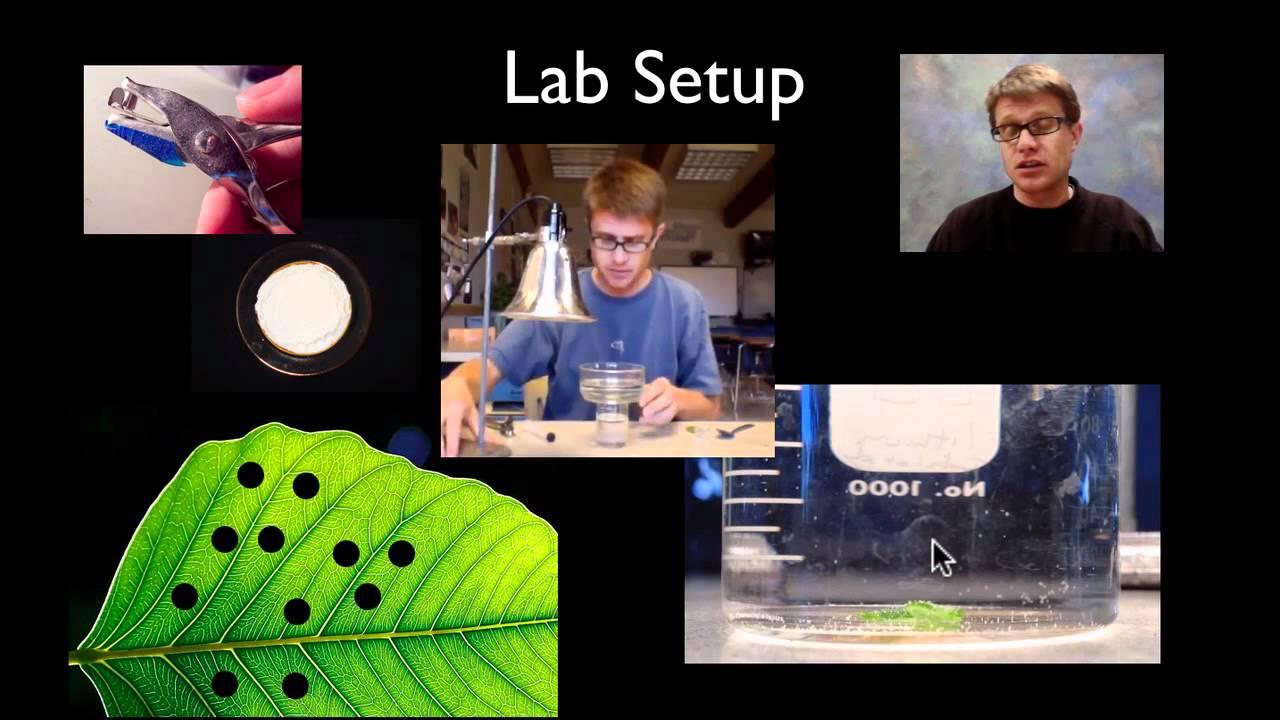 ap biology photosynthesis lab