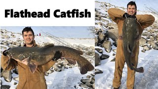 Winter Fishing Red Rock Reservoir Catching over 100lbs of Catfish