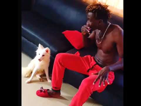 Cute! Watch as Sheliroy freestyles for his White Dog!