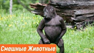 Смешные Видео про Животных Приколы с Котами Приколы 2021