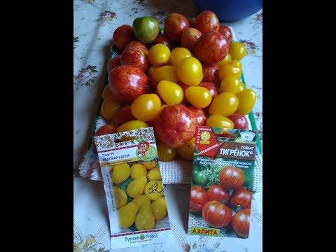 Обзор томатов. Сорта