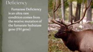 Yud the Elk on Mormon Polygamy