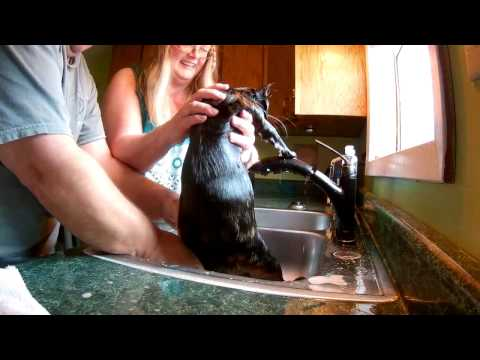 Cat bathing gone wrong !!!!!!!!