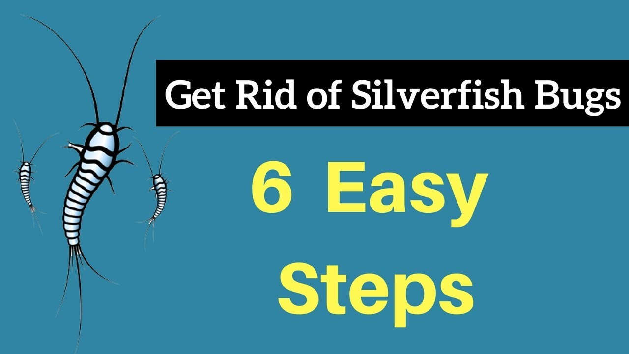 how to get rid of silverfish bugs without professional help fast permanently youtube. Black Bedroom Furniture Sets. Home Design Ideas