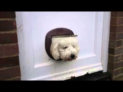 Cat Flap Dog!