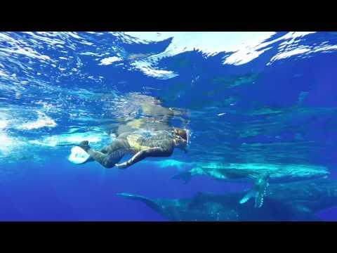 Best of Sandy Beach Resort Tonga Whale Resort