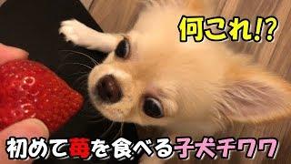 苺みるく(*´ω`*)♪ ◇Twitter https://twitter.com/miruku20190120 ◇Inst...