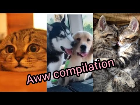 Aww compilation | cute and funny pet videos compilation 4