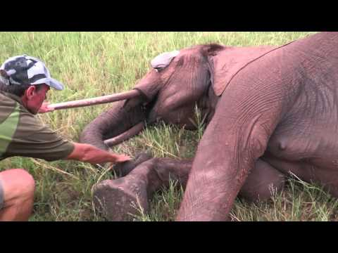 How M.A.P.P. Saved an Elephant - Shared by Inspiration Zimbabwe