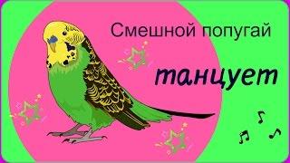 Смешной попугай танцует//Танцующий попугай(Наш смешной попугай Тоша танцует под музыку. не читать волнистый попугай, попугаи танцуют под музыку,..., 2016-11-06T10:06:03.000Z)