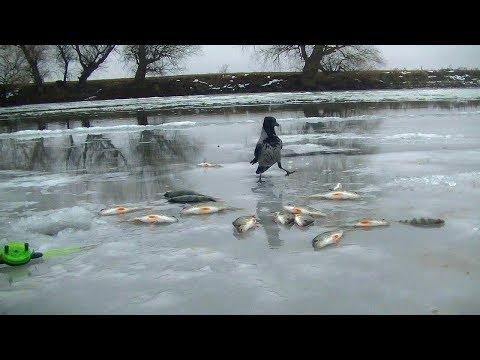 Первый выход на лед 2019. Ловля окуня в Астраханской области