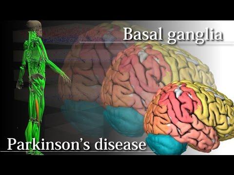 Basal ganglia and Parkinson