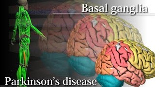 Basal ganglia and Parkinson