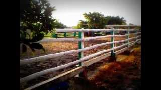 VIKRAM STUD & AGRICULTURAL FARMS, Porbandar , Gujarat , INDIA