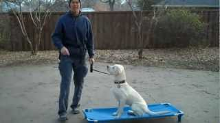 Argyle Dog Training | Piper The Labrador Early Days | Redeeming Dogs - Dog Training | Tod Mcvicker