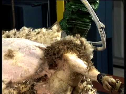 Robot Sheep Shearing