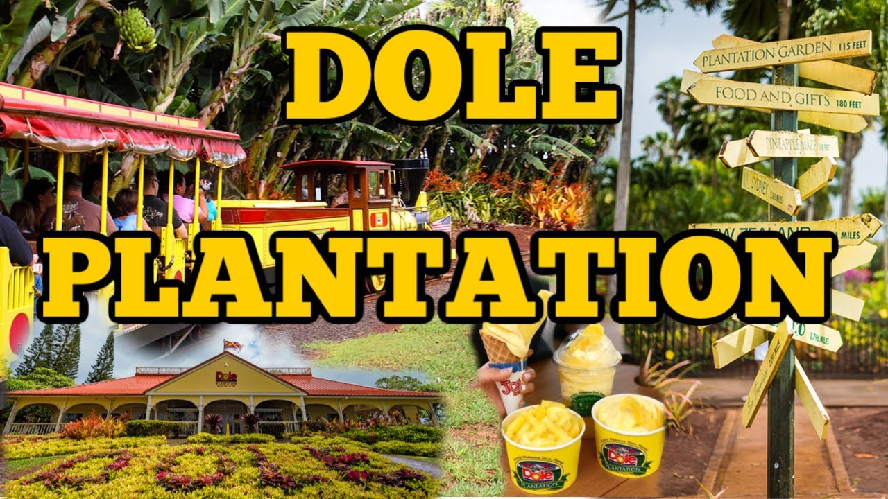 Dole Plantation Hawaii Wahiawa Oahu Pineapple Express Train Youtube