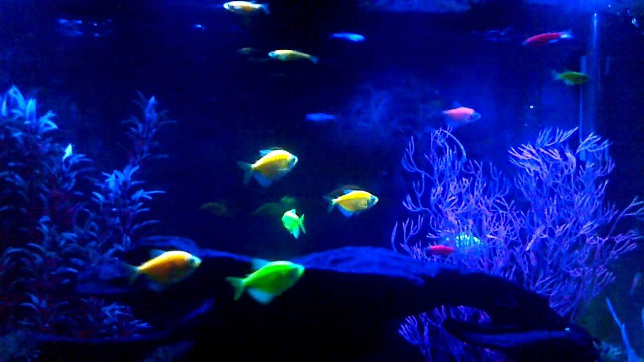 glofish report Amazoncom : glofish small cabomba, orange plant : aquarium decor plastic  plants : pet  glofish enhanced multipack plastic aquarium plants, 3 count.