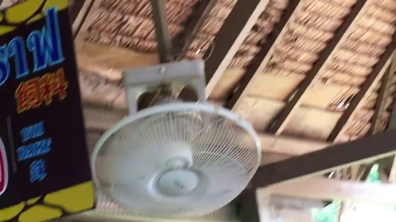 Mitsubishi Brand Ceiling Orbit Fans At A Zoo