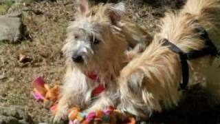 Wrapped In Love -col. Potter Cairn Rescue Network