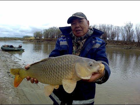Рыбалка на реке Амур. Сазан, карась.Лютый клёв!