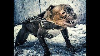 Решил купить собаку,тогда смотри!))
