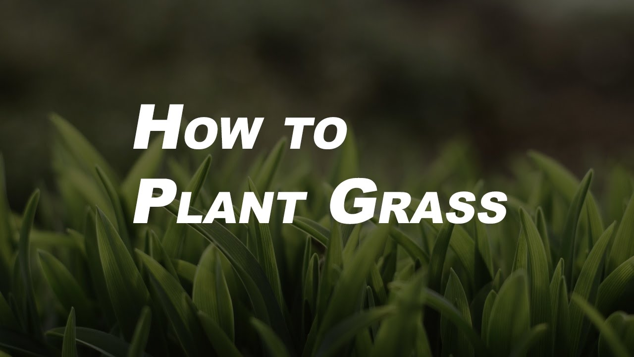 Basic Gardening Tips for Beginners How to Plant Grass YouTube
