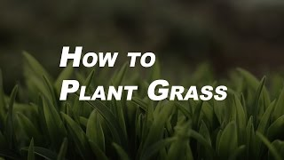 Basic Gardening Tips for Beginners   How to Plant Grass