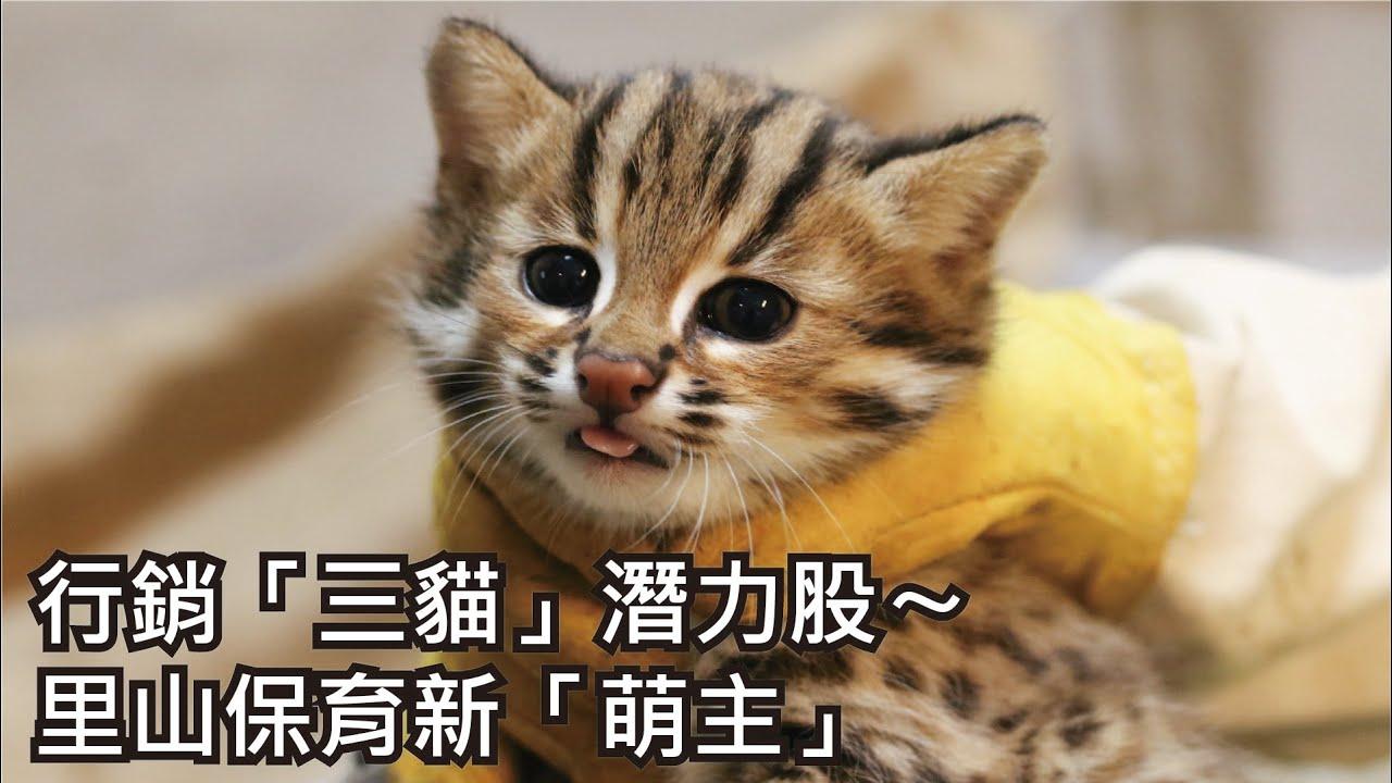 行銷「三貓」潛力股〜里山保育新「萌主」