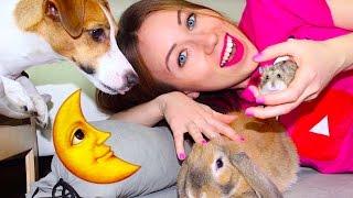 МОЙ ВЕЧЕР СО ВСЕМИ ПИТОМЦАМИ: СОБАКА КРОЛИК ХОМЯК УЛИТКИ И РЫБКА | Elli Di Pets