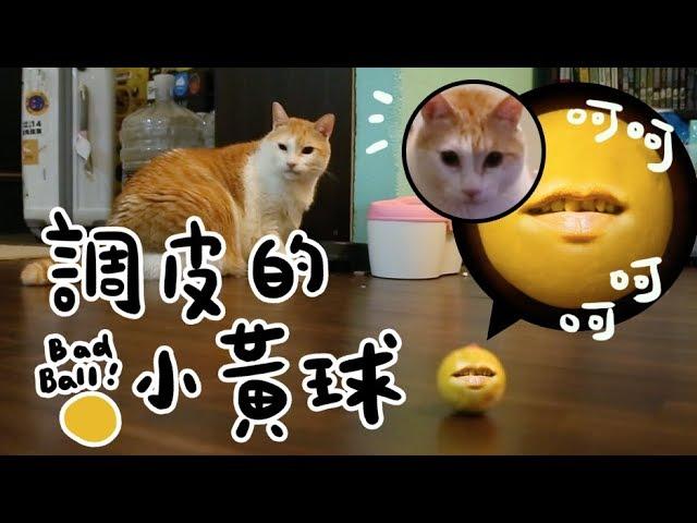 黃阿瑪的後宮生活-調皮的小黃球-阿瑪森77