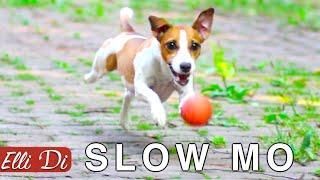 ЧТО БУДЕТ ЕСЛИ ЗАМЕДЛИТЬ СОБАКУ | SLOW MO СОБАКА | Elli Di Собаки