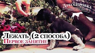 Дрессировка щенка - Лежать - 2 щенка / 2 характера / 2 способа - Дрессировка дратхаара