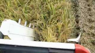 クボタコンバインER467の稲刈りの最高速度は、秒速1.75m時速...