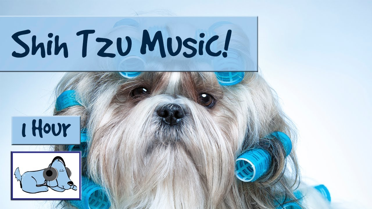 small dog shih tzu music for shih tzu s relax your small dog perfect for 9015
