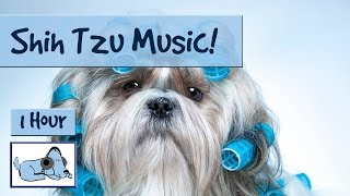 Music for Shih Tzu's! Relax Your Small Dog, Perfect for Your Hyperactive Shih Tzu! #SHIHTZU01