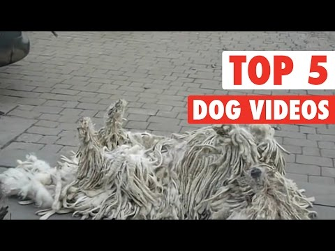 Top 5 Dog Videos    Jan 1, 2016