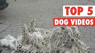 Top 5 Dog Videos || Jan 1, 2016