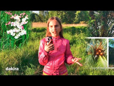 Программа распознавания растений по фото онлайн с телефона