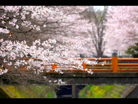 WOOD OF BENTEN,FUJIMINO,JAPAN [埼玉県ふじみ野市弁天の森]   by mezamashiterebi