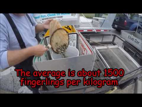 Video From The Field: Harvesting Bass Fry At The Texas Freshwater Fisheries Center