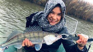 Где искать судака осенью Речная рыбалка на судака осенью Судак на Днестре