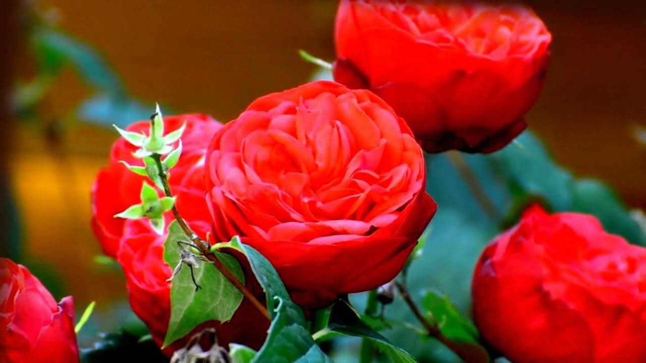 денег стихи про миллион алых роз пожалуйста есть