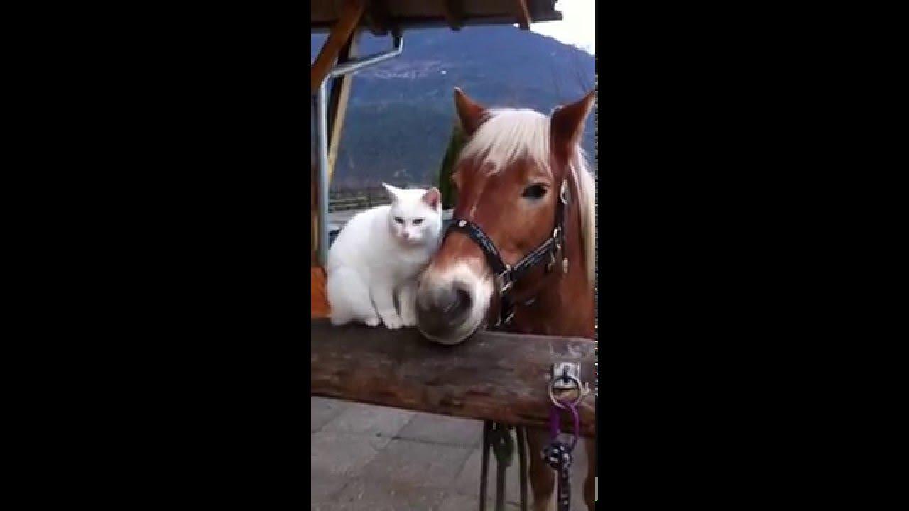 pferd und katze beim kuscheln  youtube