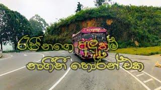#Dam Rajina New Nagini Horn - දම් රැජිනගෙ අලුත්ම නාගීනී හෝර්න් එක
