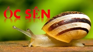 Em tập đọc tên các con vật | Bé học nói tên các loài động vật Con ốc sên | Dạy trẻ thông minh sớm