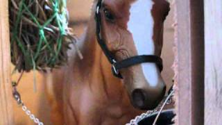 Breyer horse movie series EXCALIBUR'S DREAM, PART 2 is HERE!!!