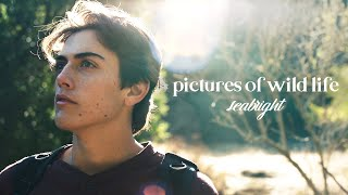 Pictures Of Wild Life - Seabright (OFFICIAL MUSIC VIDEO)
