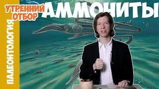 Аммонит-долгожитель. Ярослав Попов.